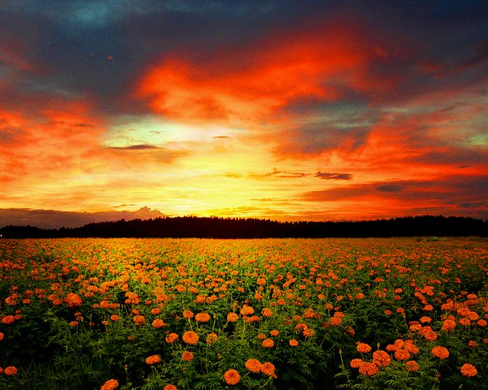 the-beauty-of-flower-fields-in-hd-photos_06